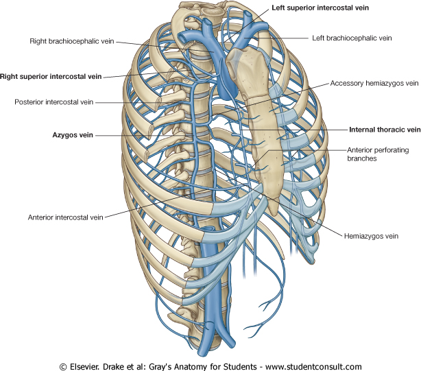 Anatomy Thorax Review Of Critical Care Medicine