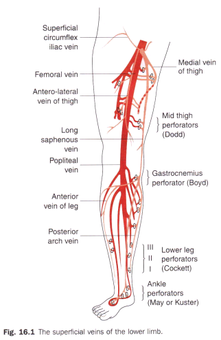 Surgery Mcqs Arterialvenous Disorders Lymphatic Disorders