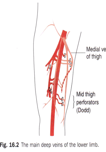 Surgery MCQs (Arterial,Venous Disorders & Lymphatic Disorders