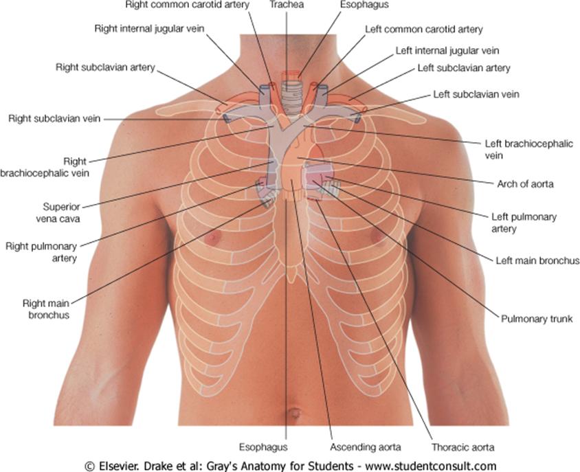 Central Venous Line Review Of Critical Care Medicine