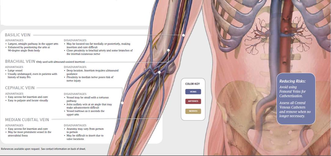 Ins Vein Anatomy For Iv Insertion