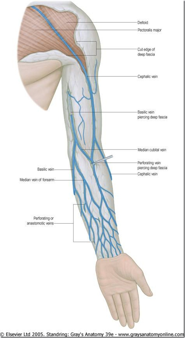 Left Arm Veins Diagram Block And Schematic Diagrams
